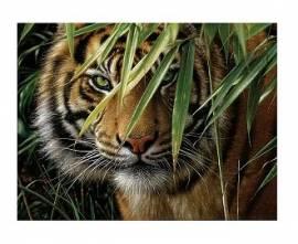 Der Tiger, 30 x 40 cm - Bild vergrößern