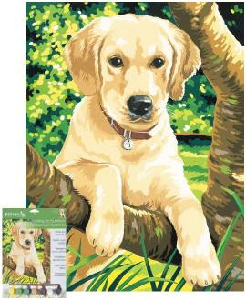 Labrador - Bild vergrößern