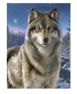 Der Wolf - Nachtwache, 22 x 30 cm