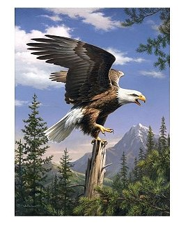 Schreiender Adler, 22 x 30 cm